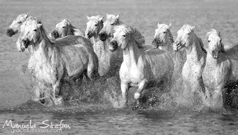 dzikie konie - znaczenie snu
